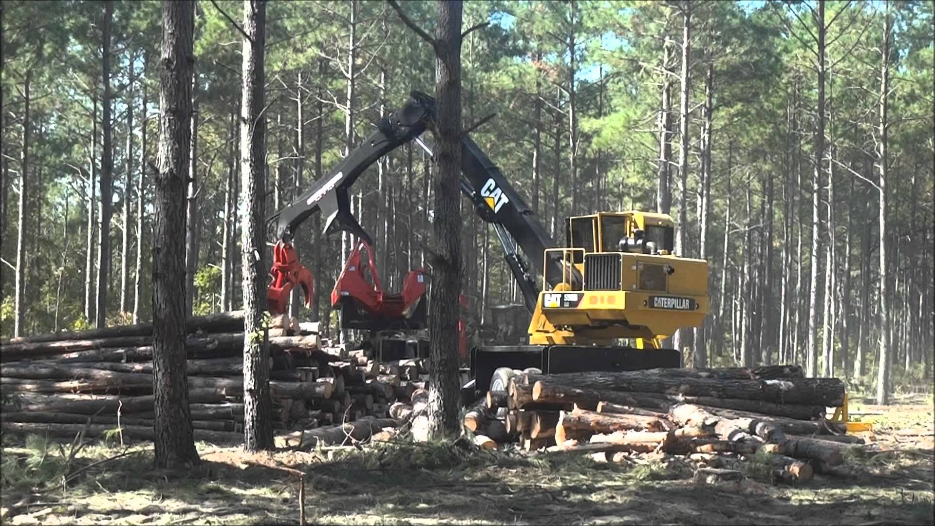 Timber Purchasing | Richton Tie & Timber