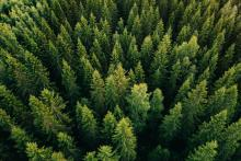 Investing in timber may be an attractive option for investors looking to pursue a socially responsible strategy.(GETTY IMAGES)